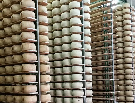 Parmesan from Reggio-Emilia, Italy